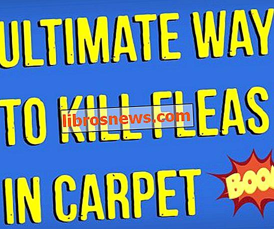 Wie man Flöhe im Teppich natürlich tötet