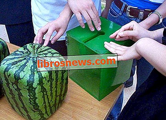Tumbuhkan Semangka Persegi