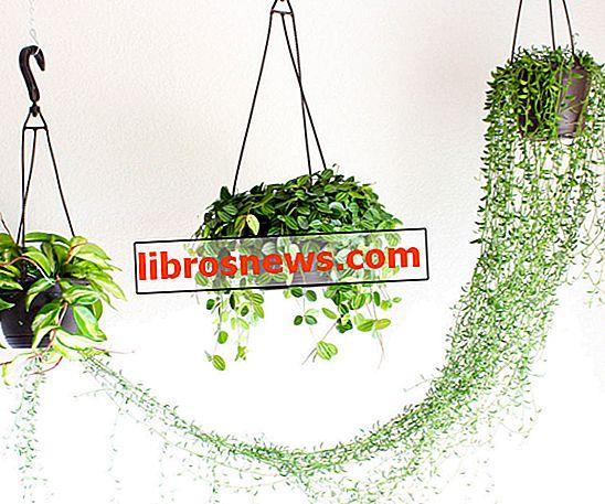 Wie man eine Pflanze an die Decke hängt
