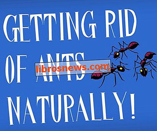 家で小さな黒蟻を取り除く方法