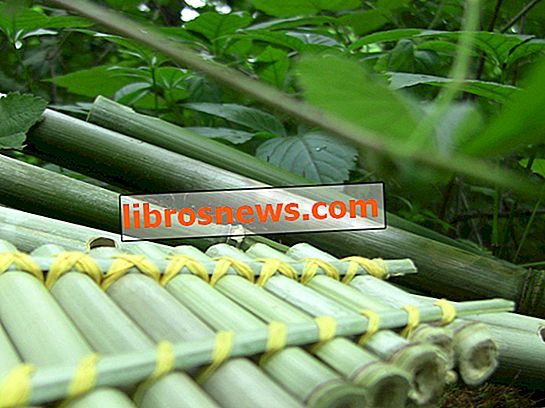 Crea 4 flauti di bambù facili gratis!
