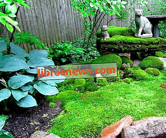 Moss Bahçesi Nasıl Oluşturulur