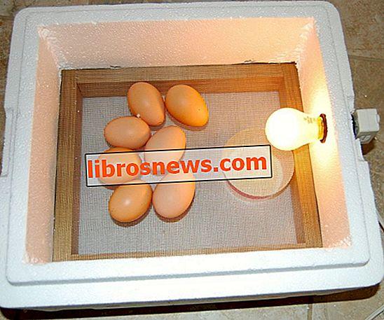 De ei-incubator van $ 3, 30 minuten