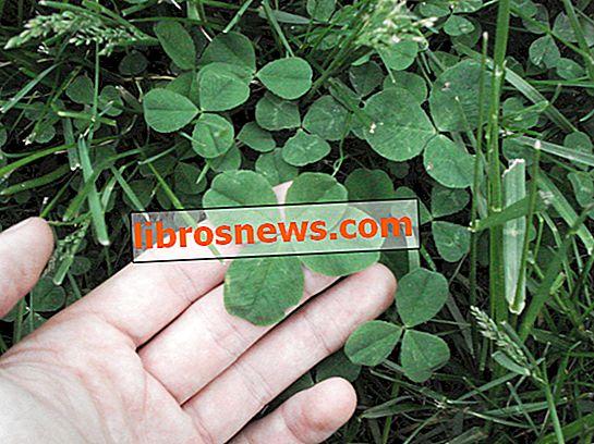 4 Yapraklı Yonca: Bir Bulucu Kılavuzu